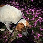 Stop and sniff the flowers.
