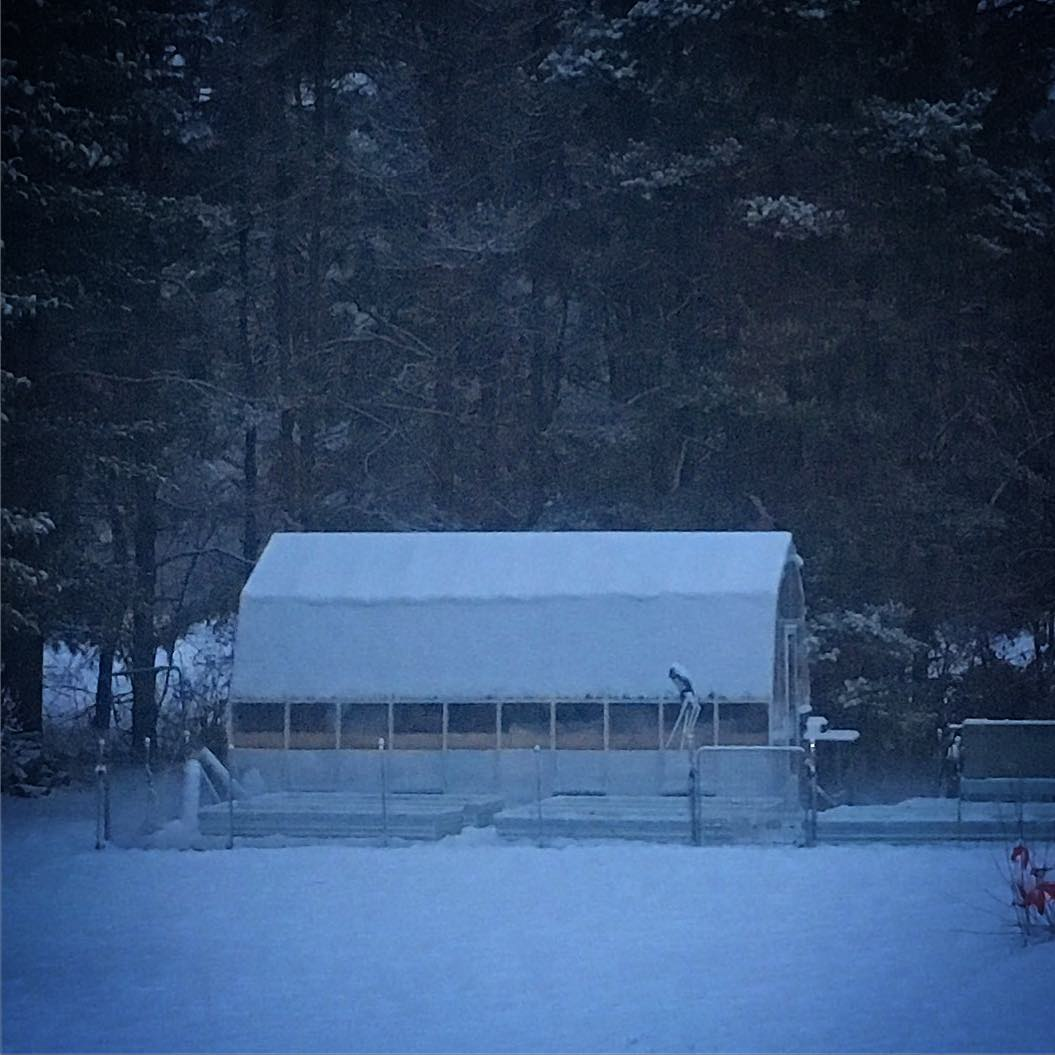 Ah! I have been waiting for the snow-load test on the greenhouse. I am surprised how much is sticking the the near vertical parts of the gambrel roof.