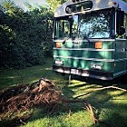 Thing you can do with an old school bus you can't do with an RV: pull stumps.